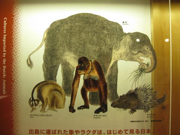 Japan meets Africa