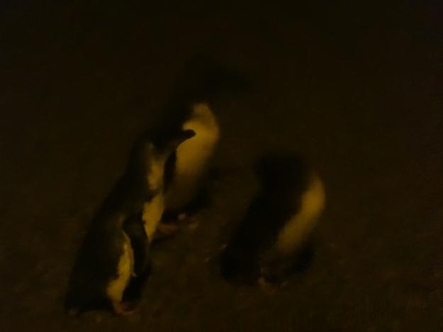 Pingüinos borrosos 2