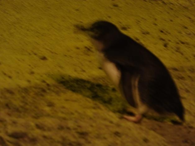Pingüino borroso 1