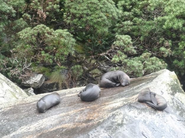 leones marinos durmiendo